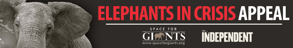 SpaceForGiantsBanner_BLACK